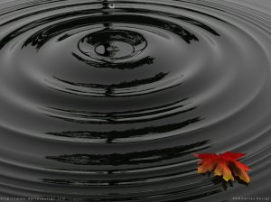 ripples-leaves-waves-desktop-free-wallpaper1